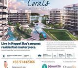 Corals at Keppel Bay 91442366