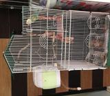 Proven Breeding Love Birds and Cage For Sale (SOLD)