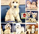 Puppies for Sale 88 Euro Pets (Imported from Europe)